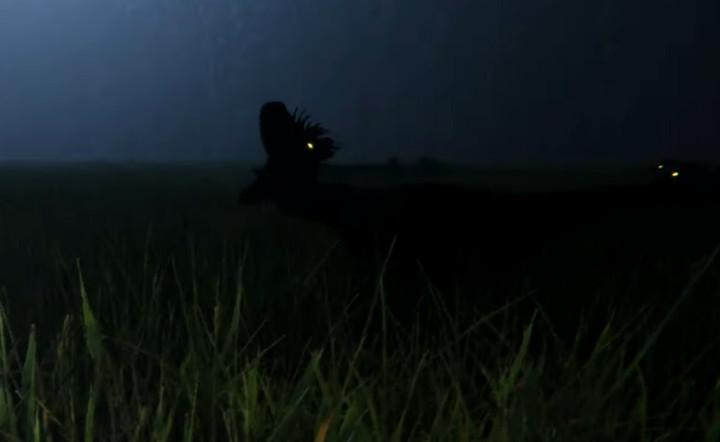 Goner Raptor