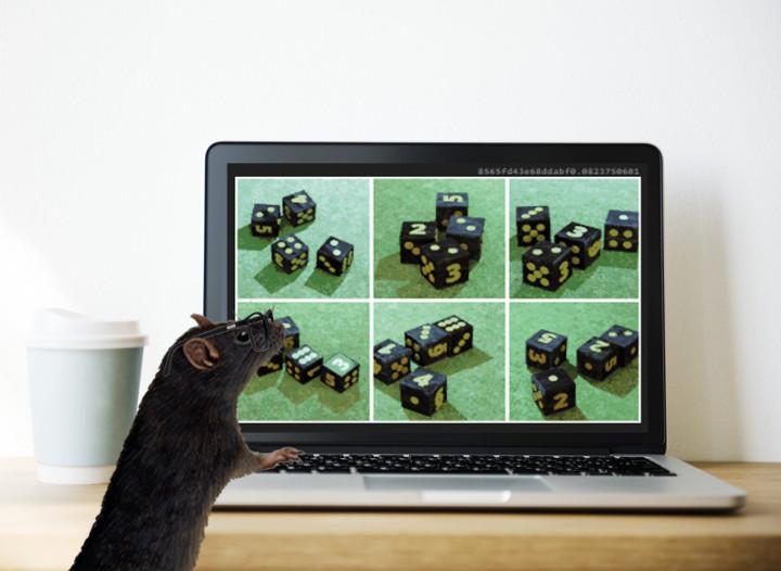 Rat doing math