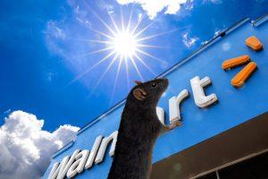 Walmart Rat - Praise the Sun