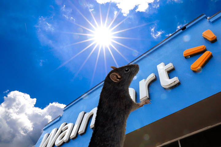 How to Buy a PS5 at Walmart: Sometimes the Sun Truly Does Shine on Even the Lowliest of Rats