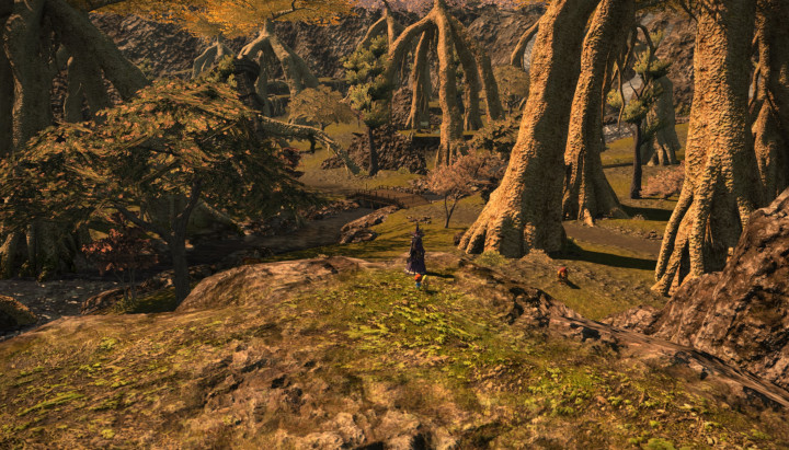 Final Fantasy XIV - Chocobo Forest